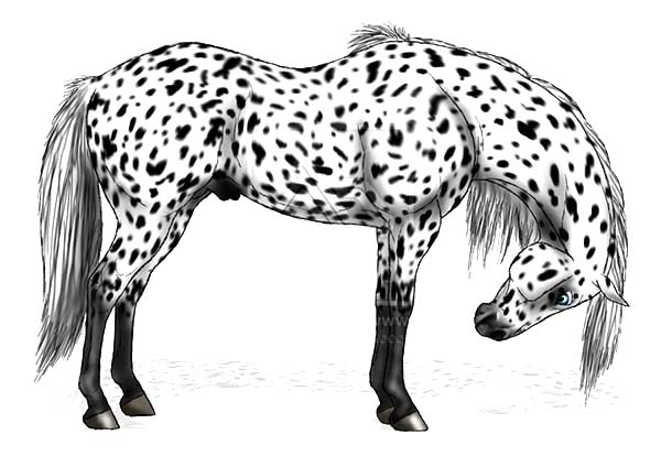 Appalooshorse, : Cheryl Appalooshorse Coloring Pages