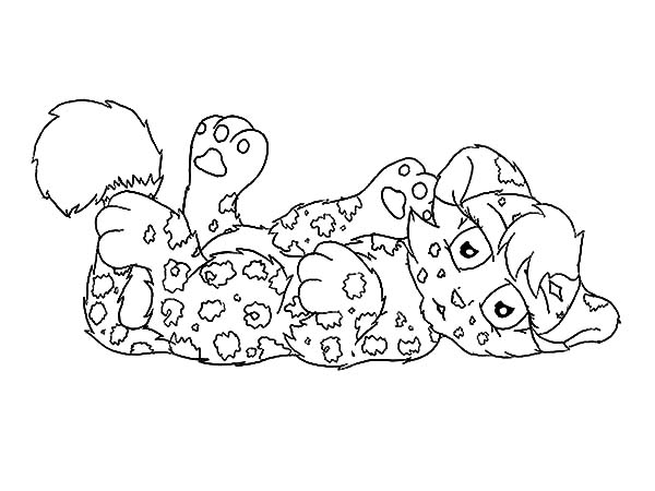Jaguar, : Cute Jaguar Cub Want to Play Coloring Pages