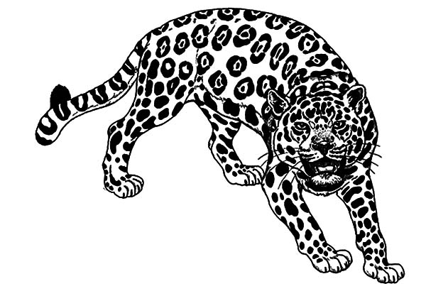 Jaguar, : Dangerous Animal Jaguar Coloring Pages