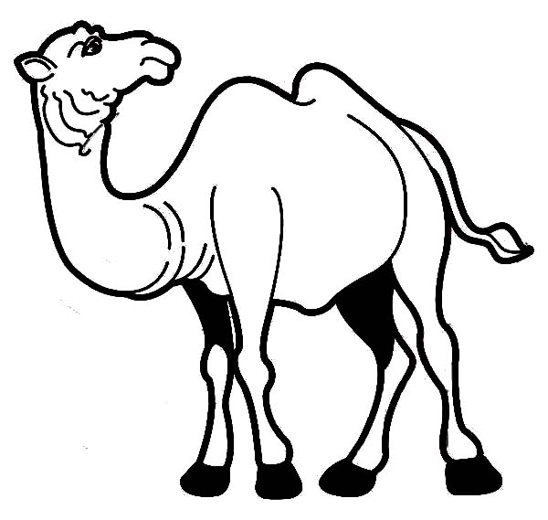 Drawing Bactria Camel Coloring Pages