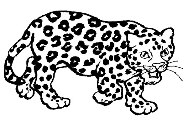 drawing jaguar coloring pages