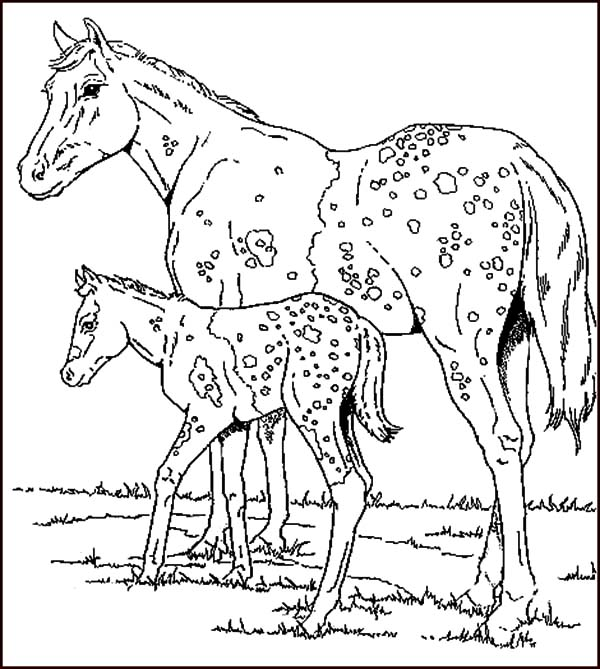 Appalooshorse, : Exotic Animal Appalooshorse Coloring Pages