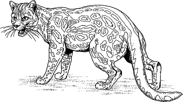 Jaguar, : Fighting Jaguar Coloring Pages