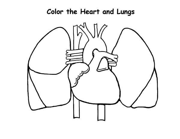Anatomi, : Heart and Lungs Anatomi Coloring Pages