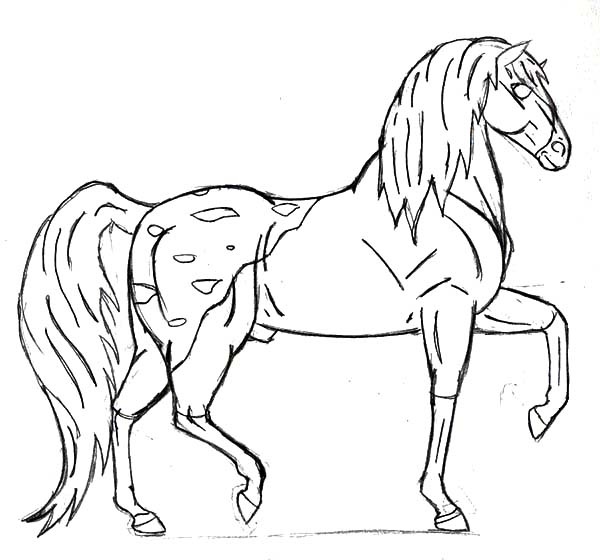 Appalooshorse, : How to Draw Appalooshorse Coloring Pages