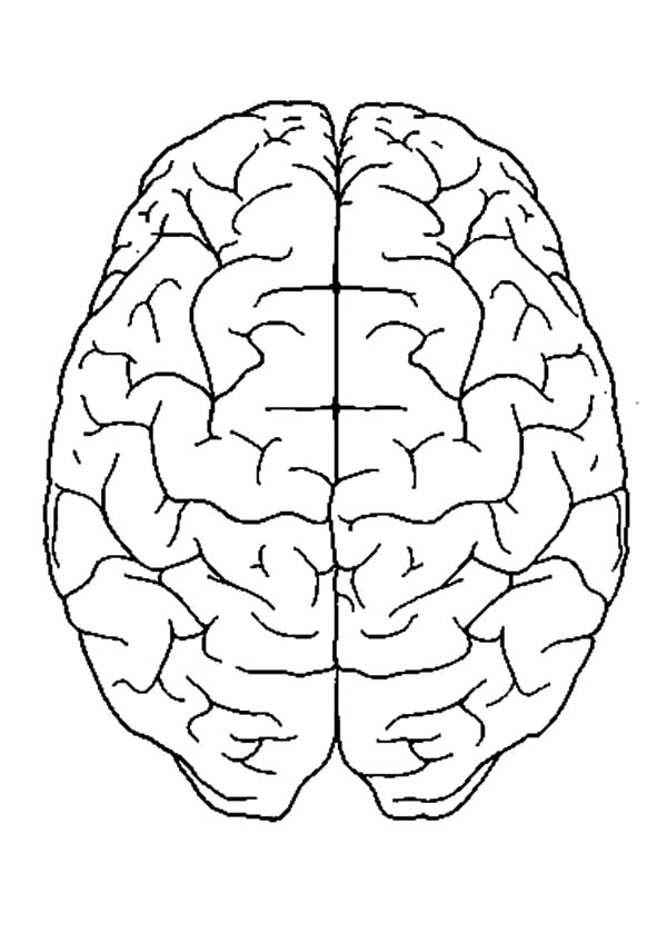 Anatomi, : Human Brain Anatomi Coloring Pages
