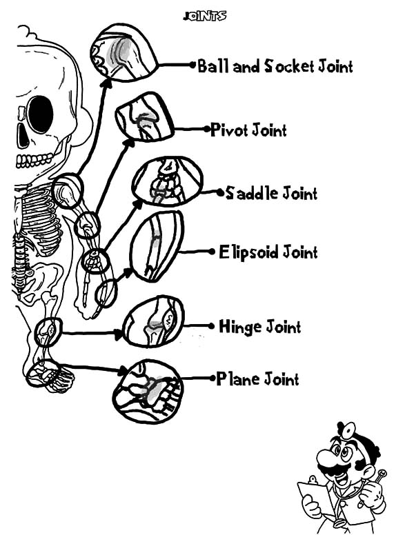 Anatomi, : Human Hand Skeleton Anatomi Coloring Pages