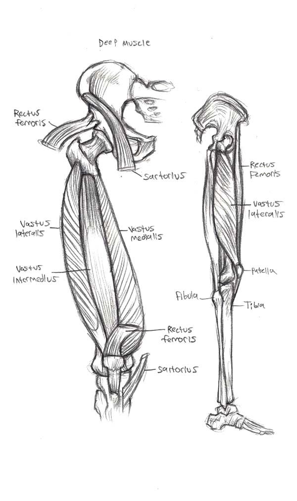Anatomi, : Human Leg Anatomi Coloring Pages
