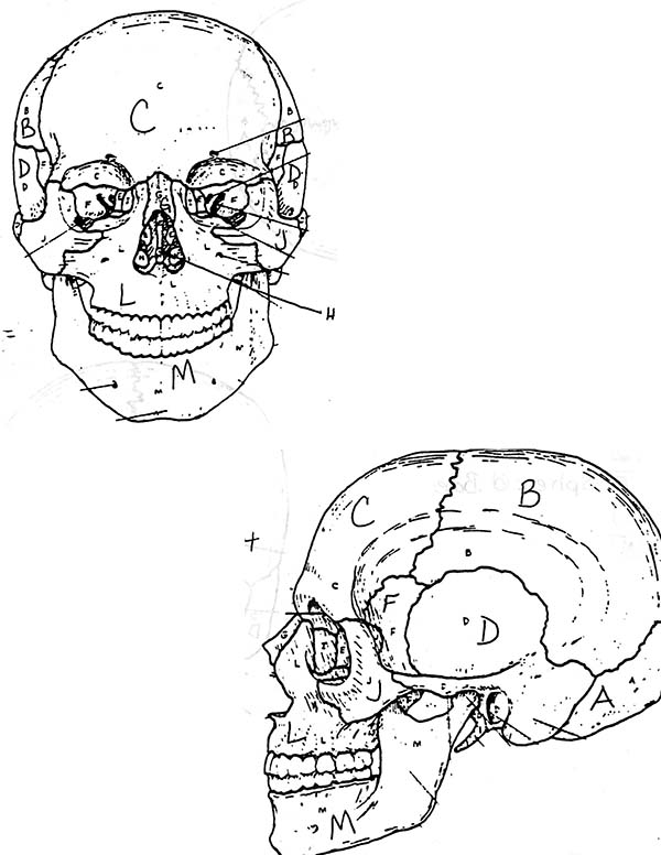 Human Skull Anatomi Coloring Pages