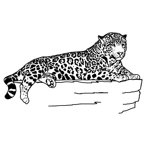 Jaguar, : Jaguar Laying Calmly Coloring Pages
