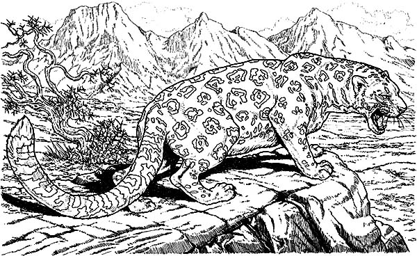 Jaguar, : Jaguar Up on Hill Coloring Pages