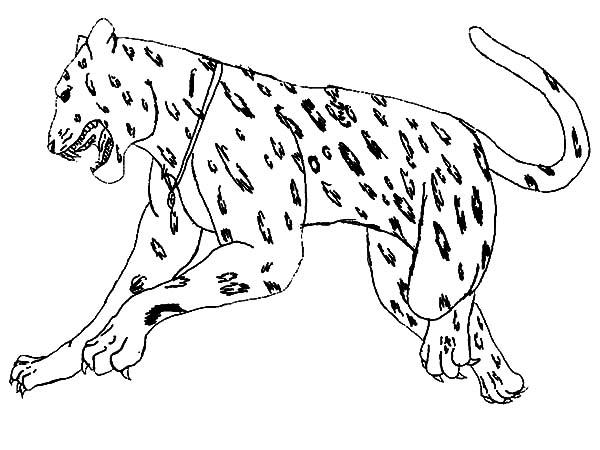 Jaguar, : Jumping Jaguar Coloring Pages