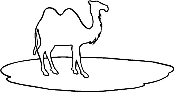 Bactria Camel, : Learn to Draw Bactria Camel Coloring Pages