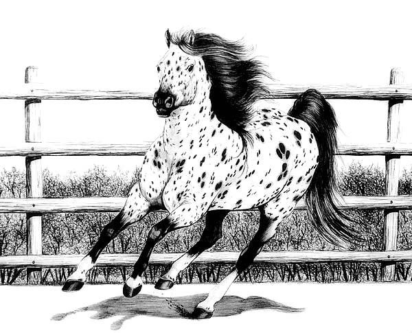 Appalooshorse, : Leopard Appalooshorse Loping Coloring Pages