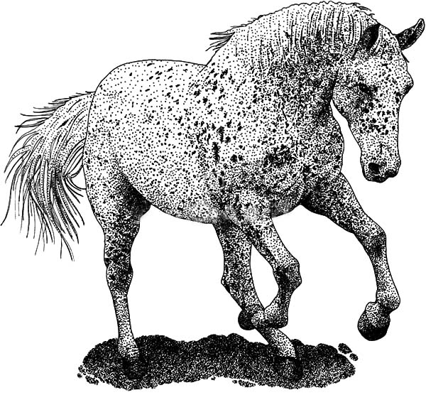Appalooshorse, : Mad Appalooshorse Coloring Pages