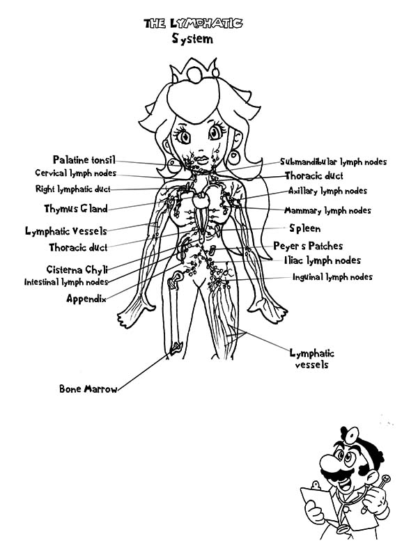 Anatomi, : Mario Bros Princess Anatomi Coloring Pages