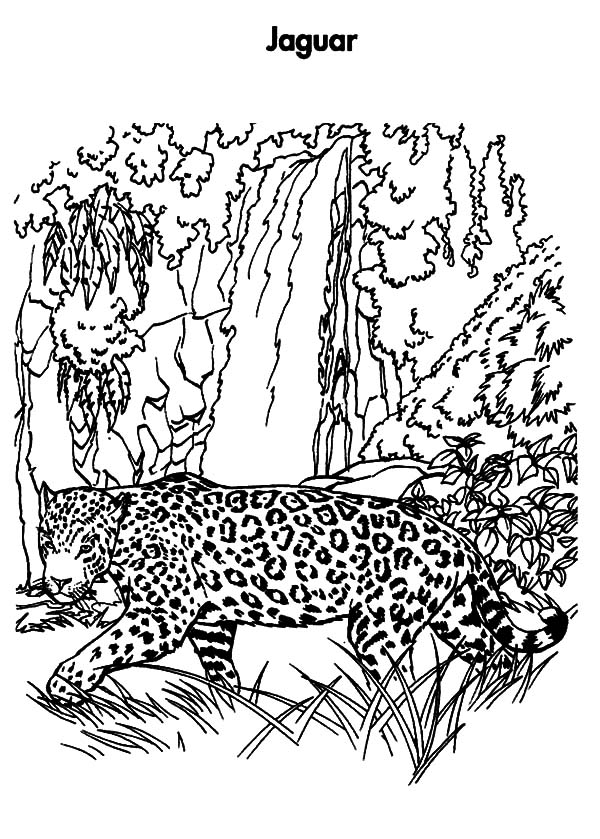 Jaguar, : Planet Earth Jaguar Coloring Pages