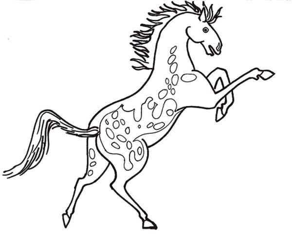 Appalooshorse, : Rearing Appalooshorse Coloring Pages