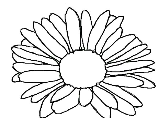 Aster Flower, : Simple Drawing Aster Flower Coloring Pages