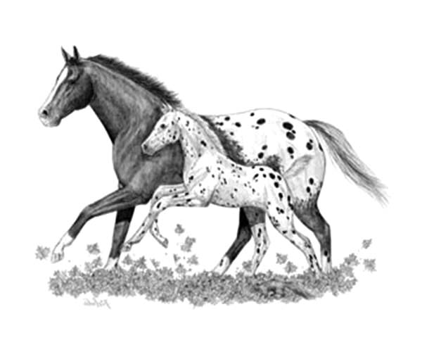 Appalooshorse, : Sketch of Appalooshorse Coloring Pages