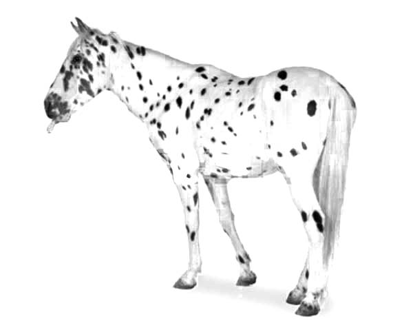 Appalooshorse, : Striped Hooves Appalooshorse Coloring Pages
