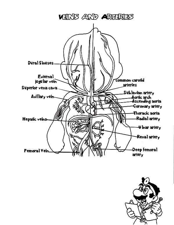 cat larynx diagram  cat  free engine image for user manual