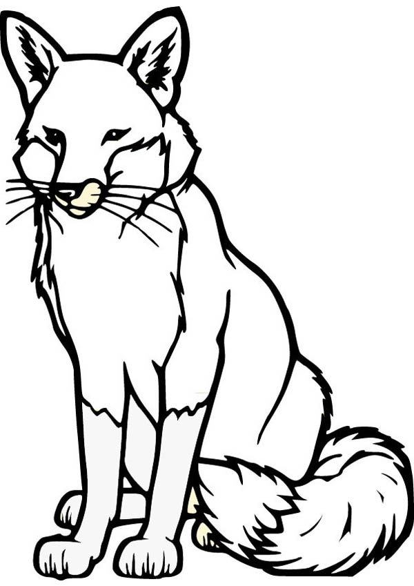 Fox, : Alpha Male Fox Coloring Pages