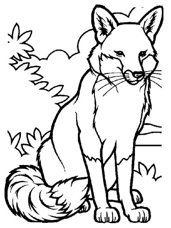 Fox, : Awesome Picture of Fox Coloring Pages
