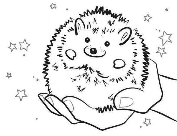 Hedgehogs, : Baby Hedgehog Smiling Colouring Pages