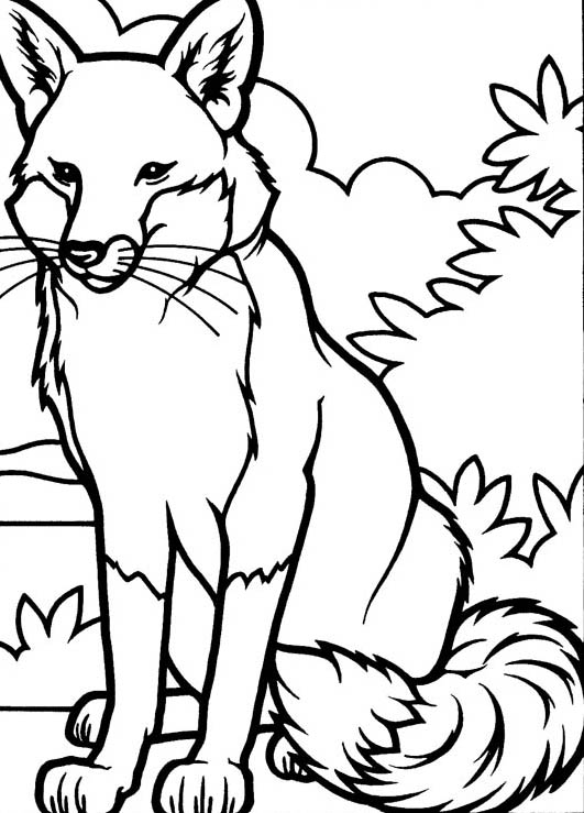 Fox, : Drawing Fox Coloring Pages