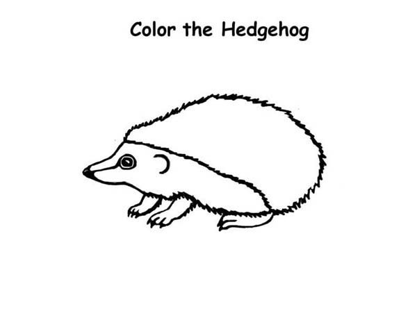 Hedgehogs, : Drawing a Hedgehog Colouring Pages