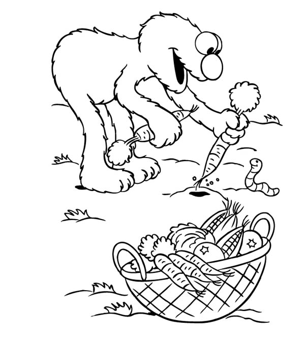Gardening, : Elmo Harvest Carrot in Gardening Coloring Pages