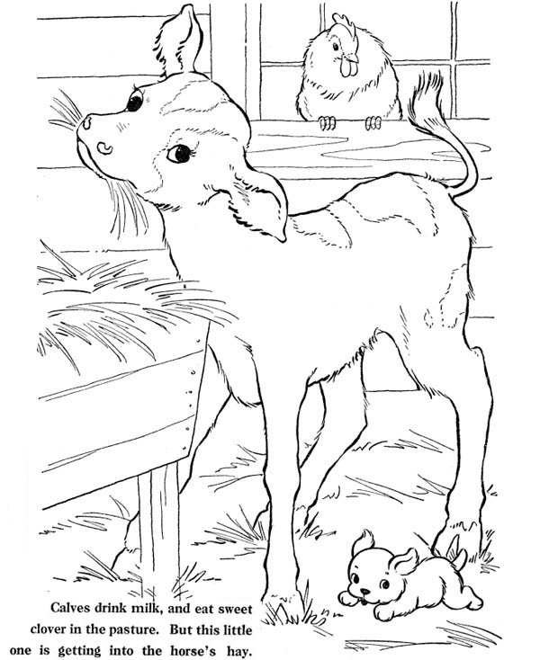 Farm Life, : Farm Life Coloring Pages Animal at Barn