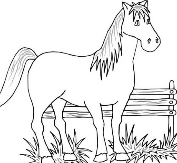 Farm Life, : Farm Life Coloring Pages Beautiful Horse