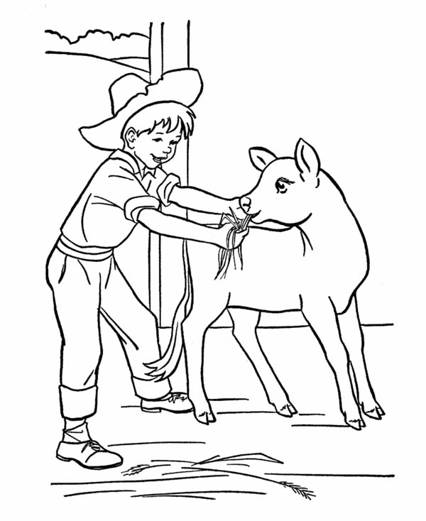 Farm Life, : Farm Life Coloring Pages Feeding Little Ox
