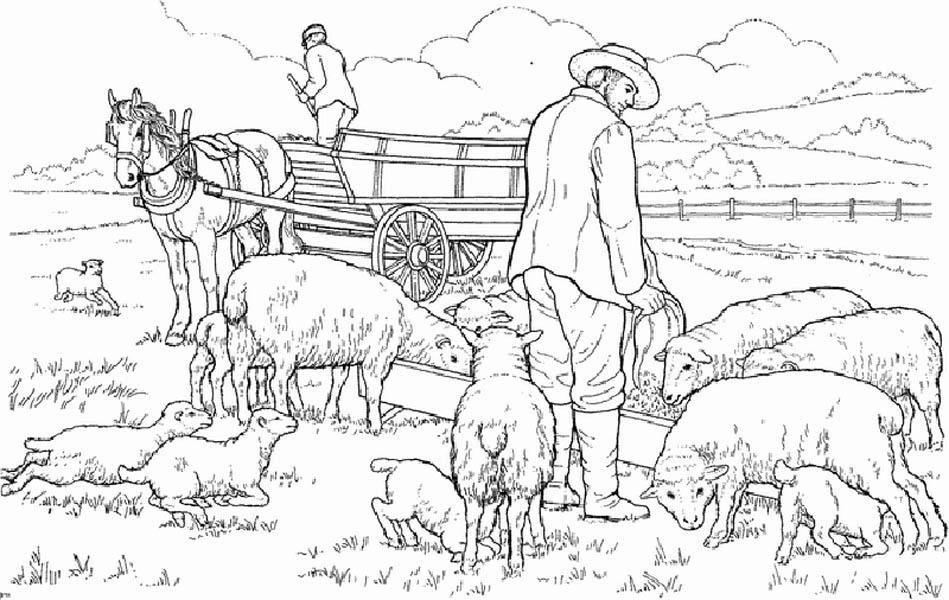 Farm Life, : Farm Life Coloring Pages Sheeps Heeding
