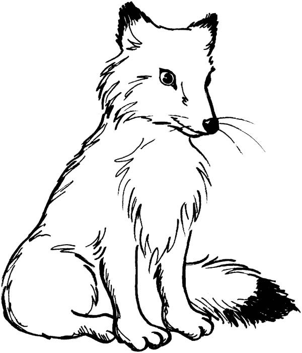 Fox, : Fox Coloring Pages