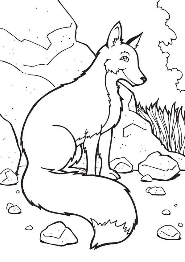 Fox, : Fox Sitting Amoung Rocks Coloring Pages