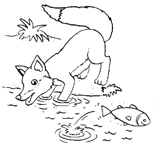Fox, : Fox Trying to Catch Fish Coloring Pages