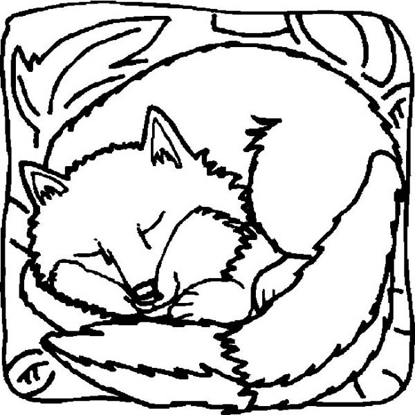 Fox, : Fox is Sleeping Peacefully Coloring Pages