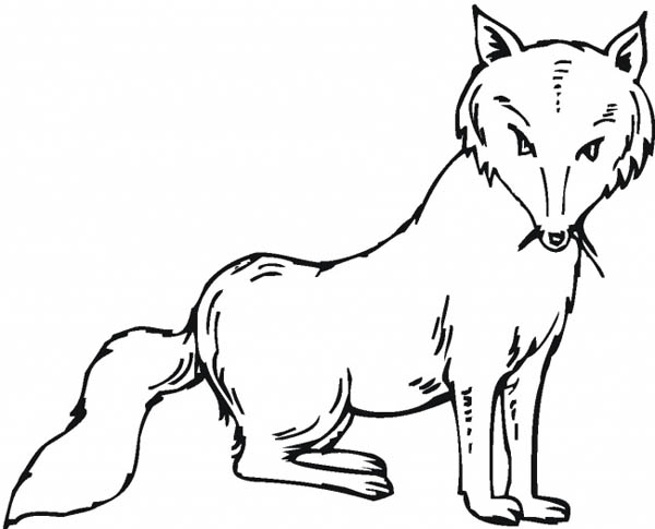 Fox, : Fox with Mustache Coloring Pages