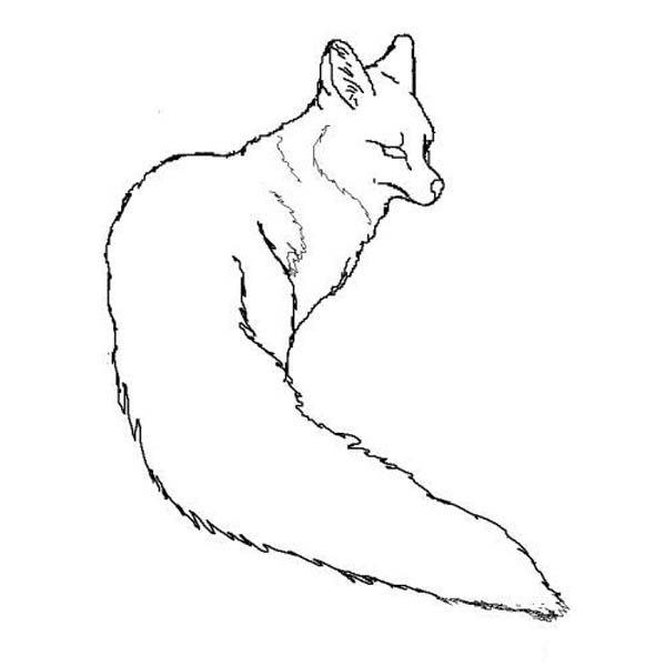 Fox, : Grey Fox Picture Coloring Pages