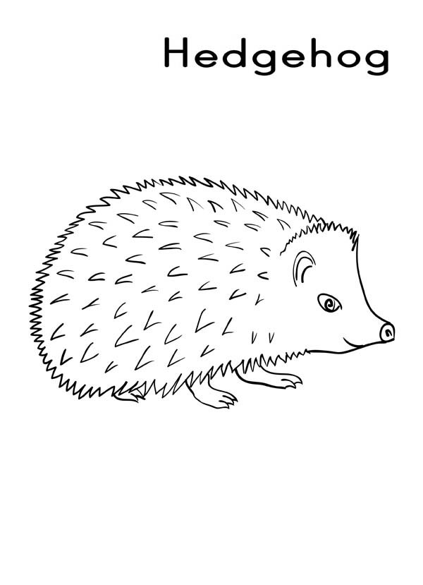 Hedgehogs, : H is for Hedgehog Coloring Pages 2