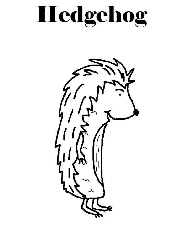 Hedgehogs, : Hedgehog Coloring Page