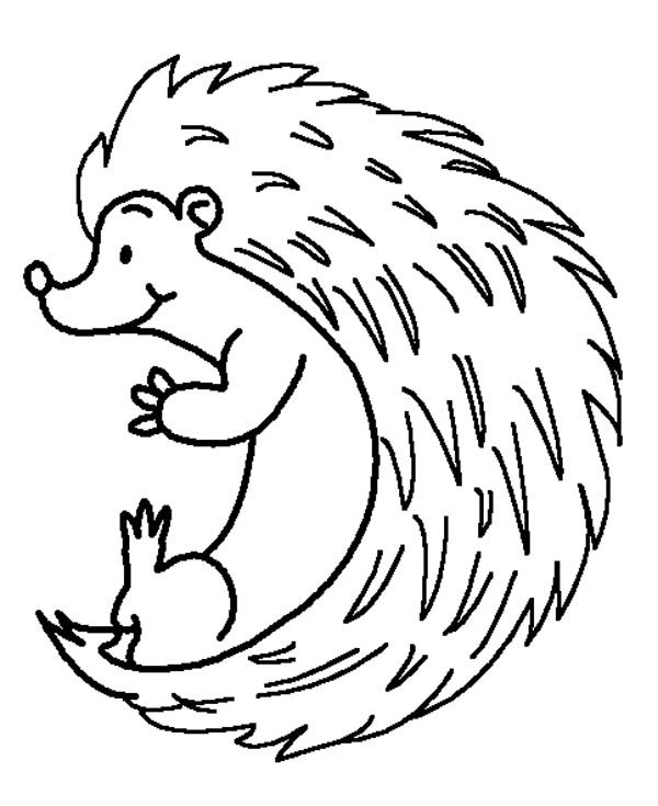 Hedgehogs, : Hedgehog Colouring Pages for Kids