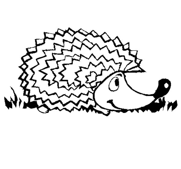 Hedgehogs, : Hedgehog Colouring Pages