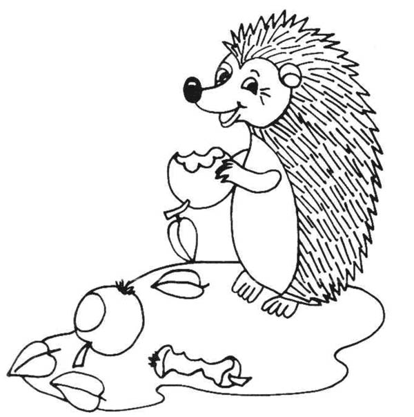 Hedgehogs, : Hedgehog Eat Three Apples Coloring Pages
