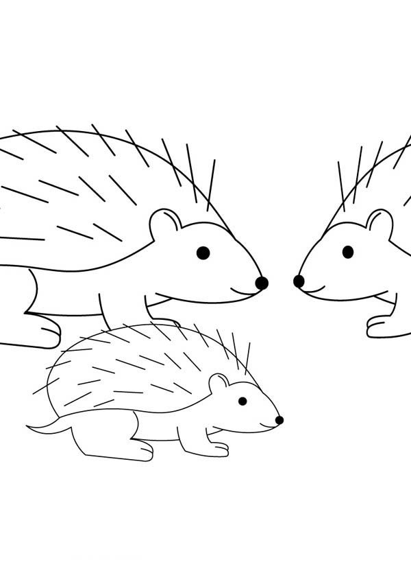 Hedgehogs, : Hedgehog Family Coloring Pages