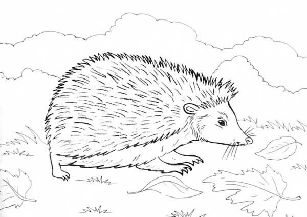 Hedgehogs, : Hedgehog Find Food Colouring Pages