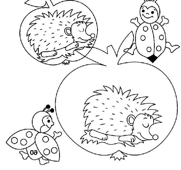 Hedgehogs, : Hedgehog Sleeping Inside an Apple Colouring Pages